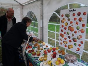 Apple tasting - 13 varieties to try