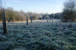 A frosty day in the orchard