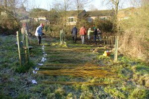 Almost done! Bundles of willow on the frosty ground